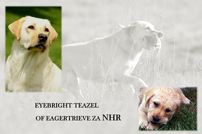 EYEBRIGHT TEAZEL