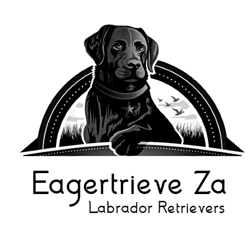 Eagertrieve Za Labrador Retrievers